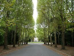 Promenade au cimetière de Bagneux : dernière demeure de 4 grandes figures de la chanson française