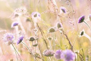 Comment choisir de belles fleurs pour personnaliser une cérémonie d'obsèques ?