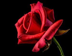 Les Nuits d'été de Berlioz – poèmes funèbres